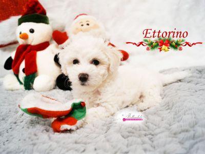 Ettorino