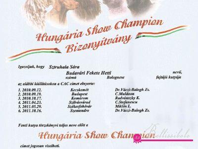 Ungarische Show Champion