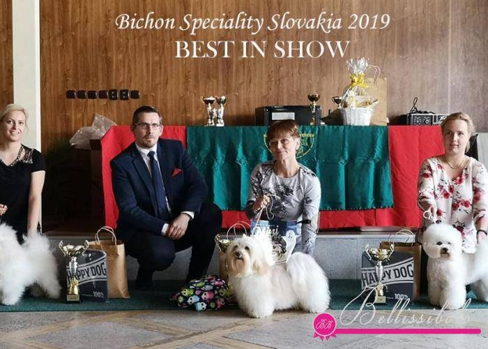 Bichon Speciality Show, Slovakia