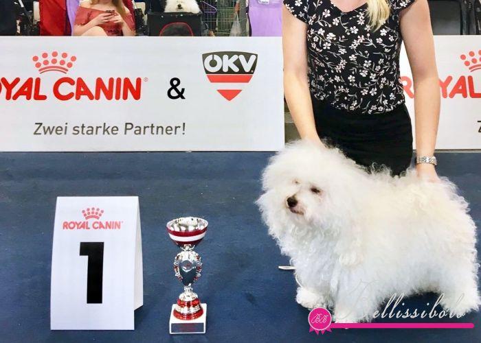 European Dog Show 2019 Wels, Austria