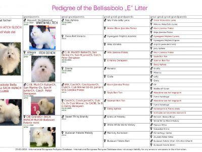 Puppies' Pedigree