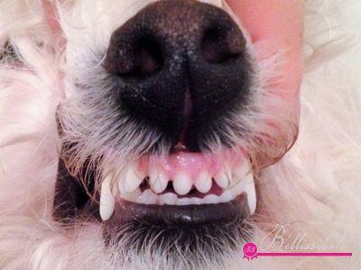 Bolognese Healthy Teeth