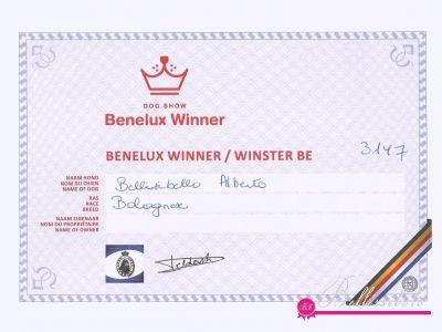 Benelux Winner 2015