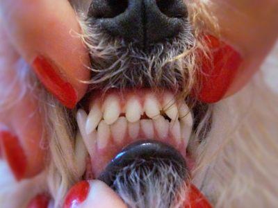 Bambina's Teeth