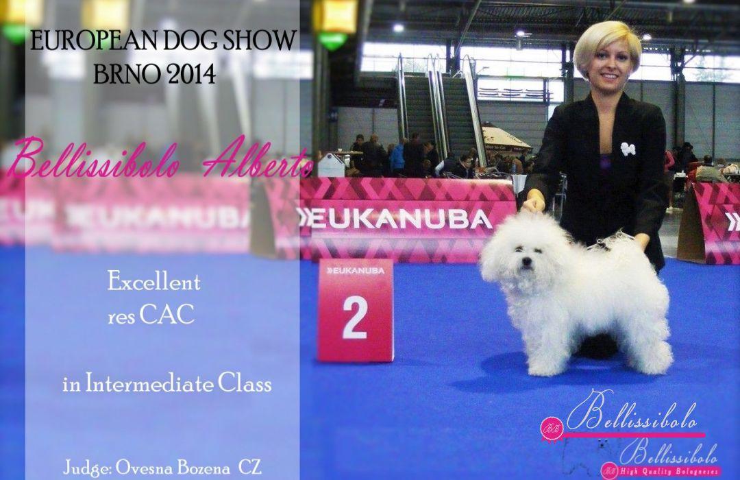 BB Alberto resCAC Euro Dog Show 2014