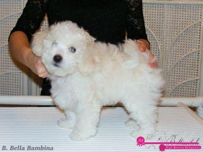 Bambina  - 8 weeks