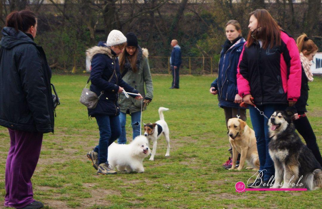 Bellissibolo Bella Bambina - Dog School