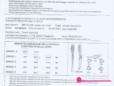 Patella Test 2