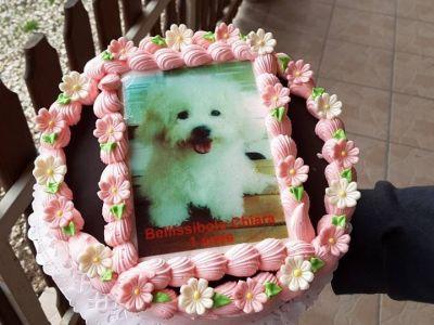 Chiara 1. Birthday Cake