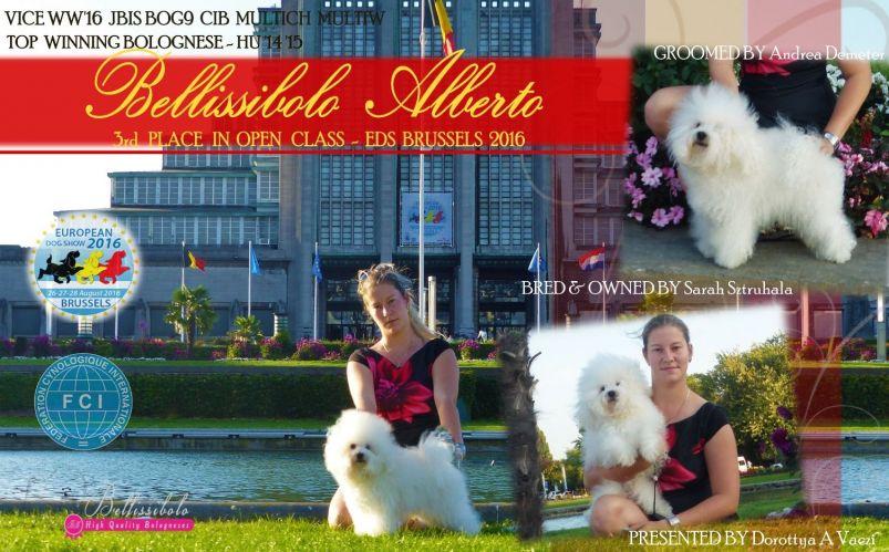 *** EUROPEAN DOG SHOW  2016 -BRUSSELS, BELGIUM***