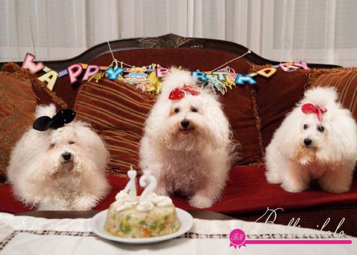 HAPPY 12th BIRTHDAY HETTI!